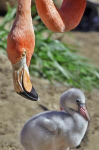 flamingo-mum