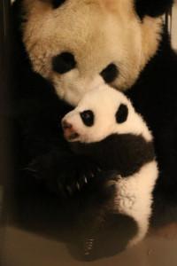 Photo ©Toronto Zoo
