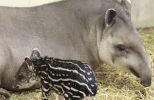 Photo from http://www.zooborns.com