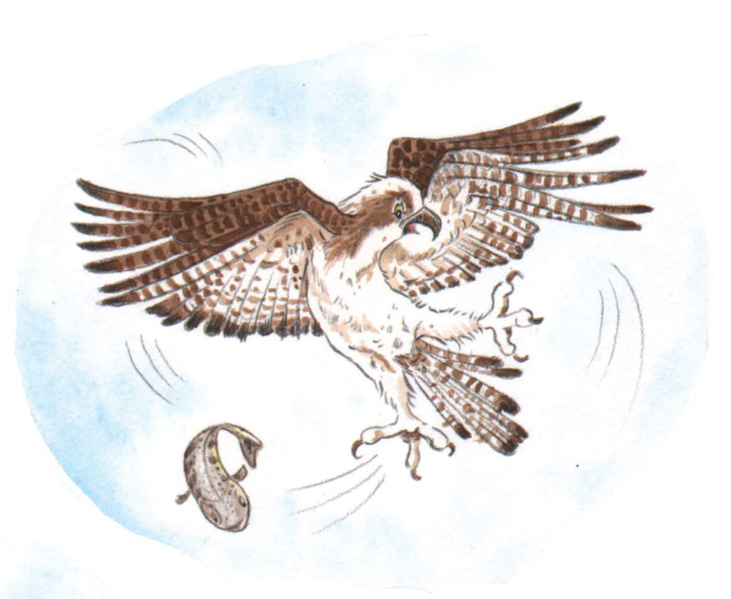 Birdwatching, illustrating nature with Kirsteen Harris-Jones